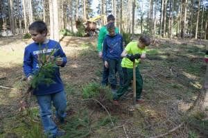 Bäume pflanzen PftP 099